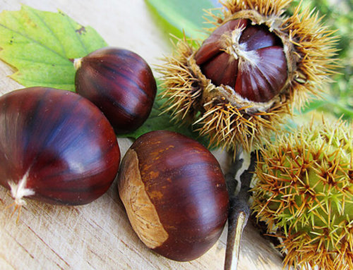 Friday November 2nd: chestnuts, what goodness!
