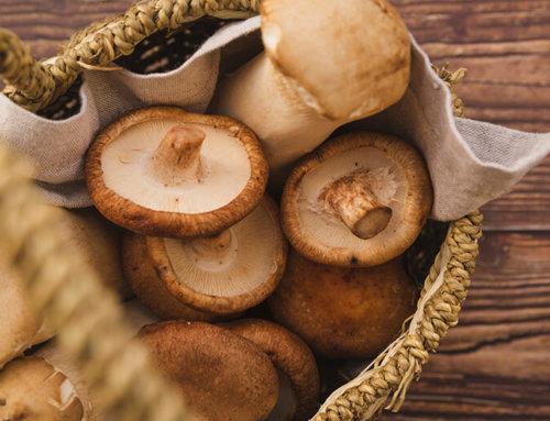 Friday October 19th, mushroom time