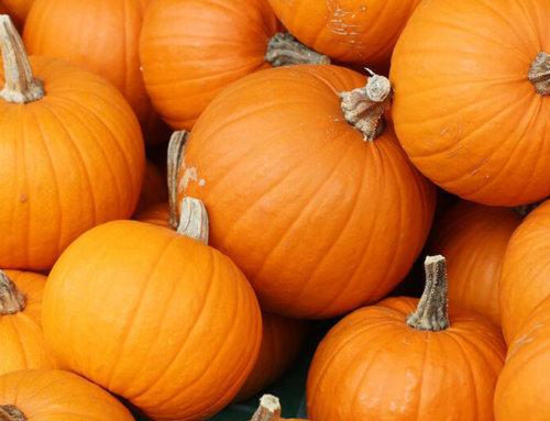 Venerdì 12 ottobre: la zucca!